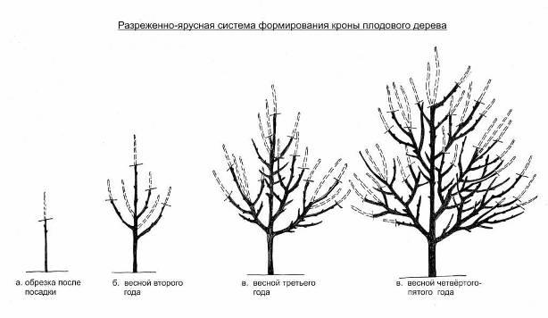 Уход и выращивание яблонь 87