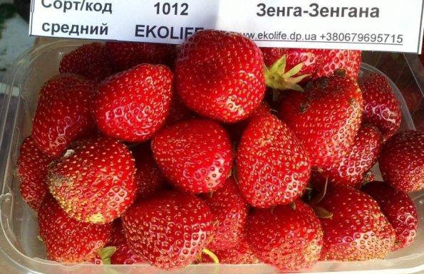 Зенга Зенгана фото ягод