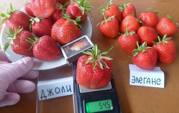 Фото ягод сорта Джоли