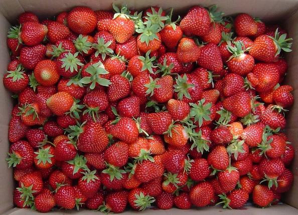 Клубника Хоней ягоды