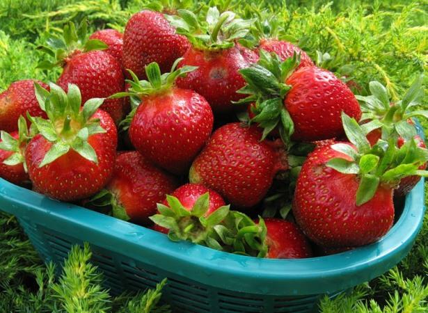 Фото ягод сорта Кардинал урожай