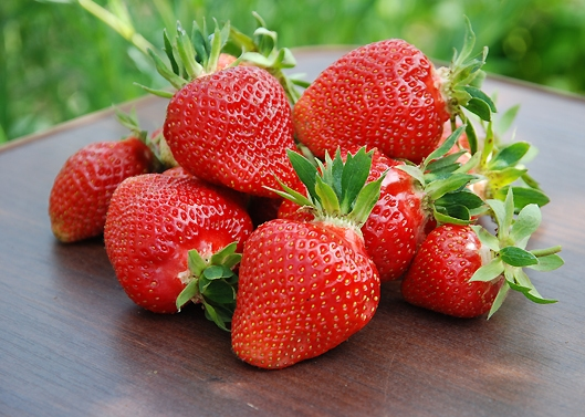 Клубника Клери фото ягод