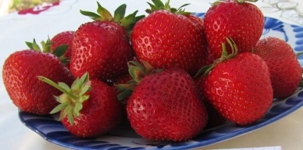фото ягод клубника Медовая