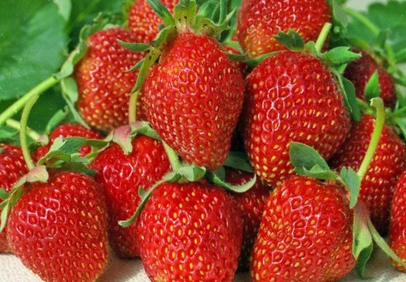 Клубника Альбион ягоды