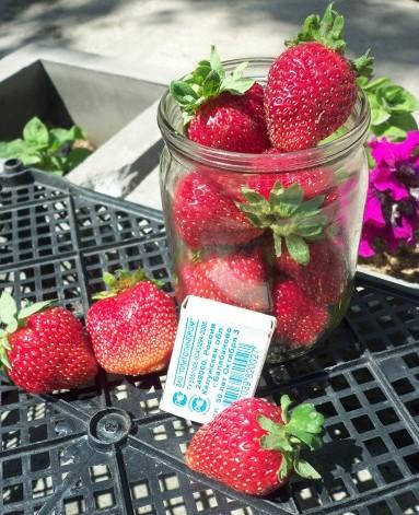 Фото сорта Женева размер ягод