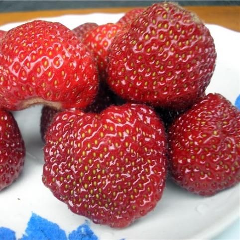 Клубника Зенга Зенгана фото ягод