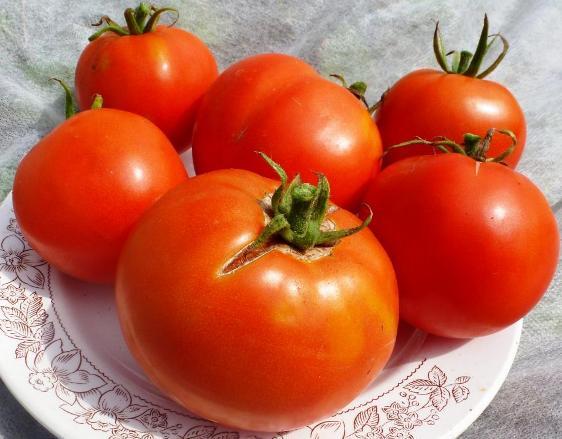 Фото помидор сорта Лабрадор