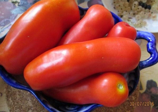 томат Жигало Особенности выращивания и ухода