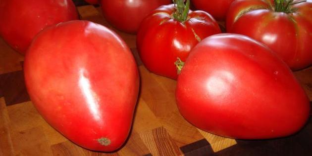 Фото помидоров сорта Мазарини