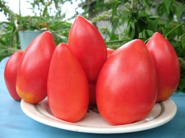 томат Супермодель Особенности выращивания и ухода