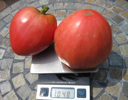 Фото помидоров Розовый мёд отзывы