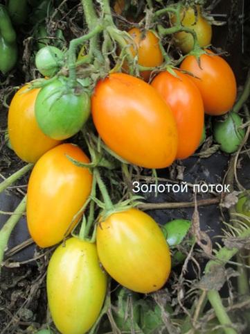 Отзывы, Особенности выращивания и ухода