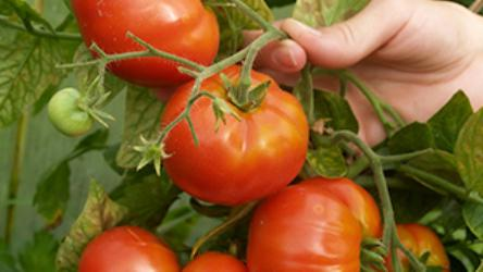 Как купить настоящие семена