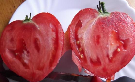 Фото помидоров Бычье сердце