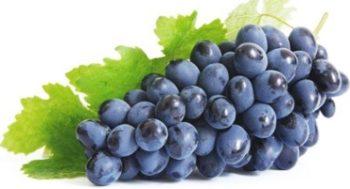 Виноград Изабелла: описание сорта с фото, отзывы