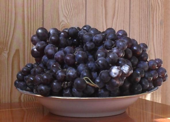 Домашнее вино из винограда Изабелла - рецепт