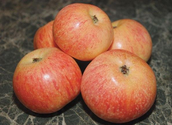 Конфетное яблоня описание