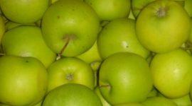 Яблоня Мутсу, описание сорта с фото,отзывы
