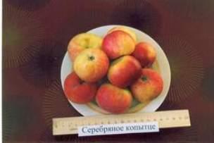 Яблоня Серебряное копытце: описание с фото, отзывы