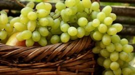 Виноград Кеша описание сорта с фото, посадка и уход, отзывы