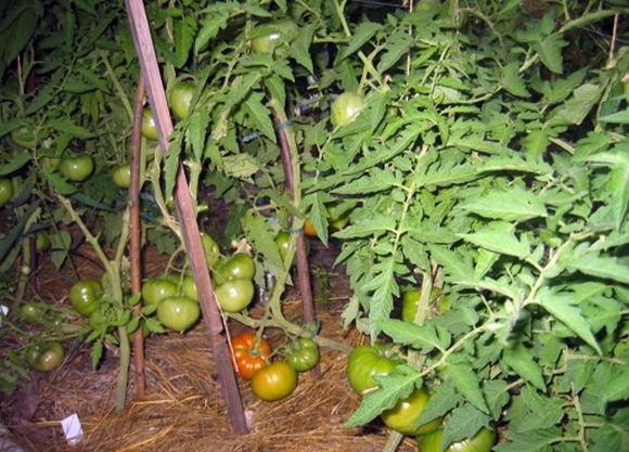 Особенности выращивания и ухода