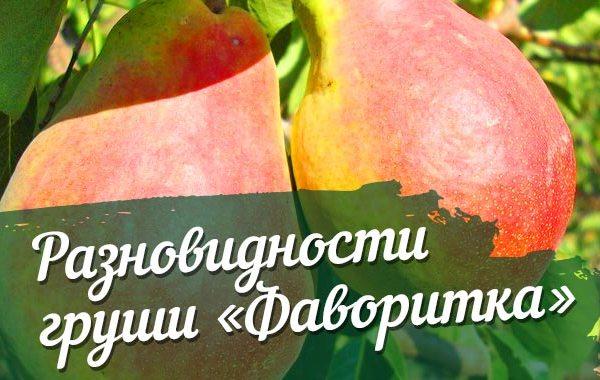 Описание и характеристики сорта
