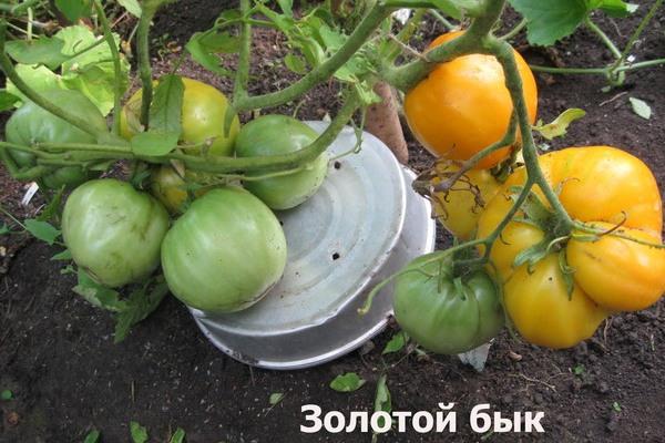Тонкости выращивания и ухода