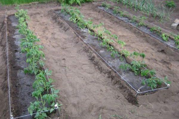 Урожайность
