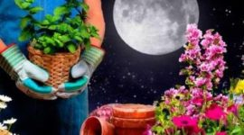 Лунный посевной календарь садовода на февраль 2019 года