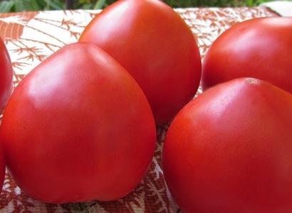 Томат Большая мамочка: характеристика, описание сорта с фото и видео, отзывы, урожайность