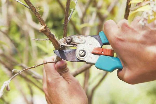 Что делать садоводу в апреле