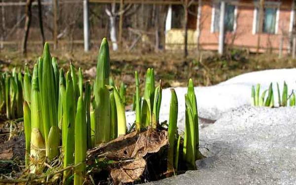 Работы садоводов в апреле