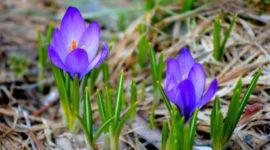 Лунный посевной календарь на апрель 2019 года для садоводов, цветоводов и огородников Таблица