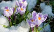 Лунный посевной календарь огородников, садоводов и цветоводов на март 2019 года